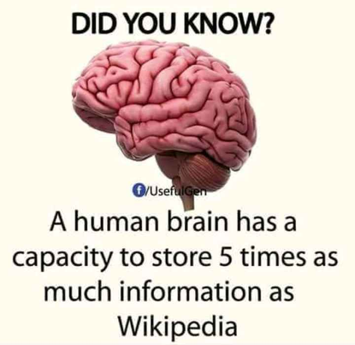 facts - DID YOU KNOW ? O / Usefulgen A human brain has a capacity to store 5 times as much information as Wikipedia - ShareChat
