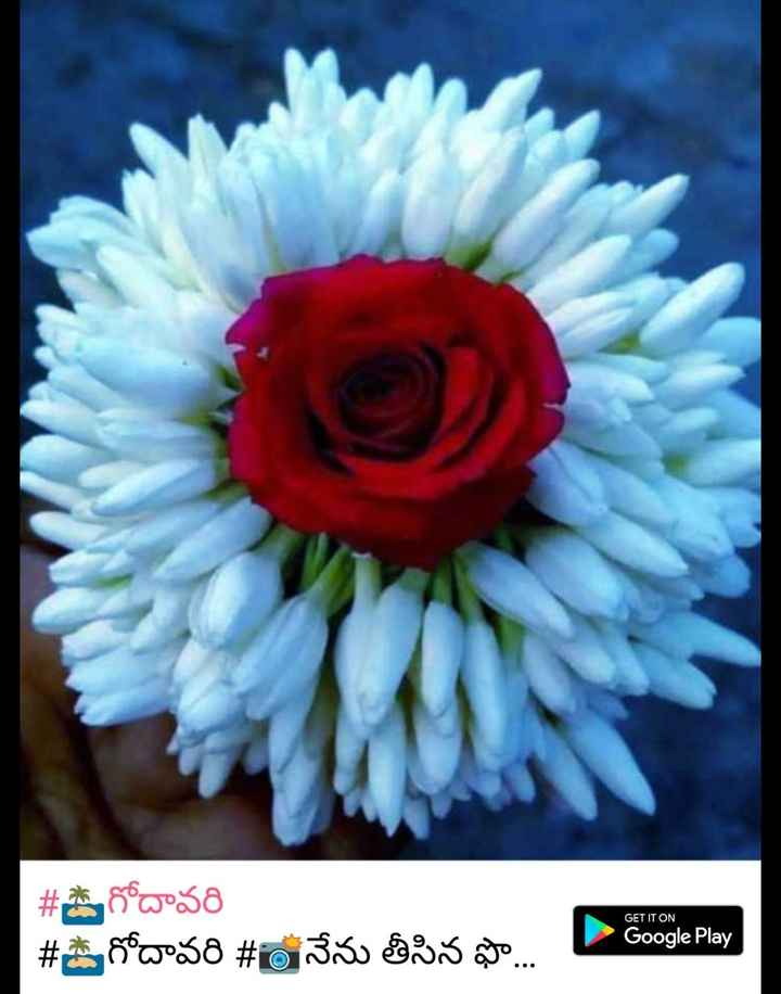 🌸flower🌸 - GET IT ON # దే గోదావరి # S గోదావరి # 6 నేను తీసిన ఫొ . . - Google Play - ShareChat