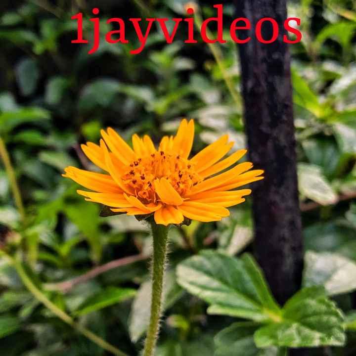 flowers - zavideos - ShareChat