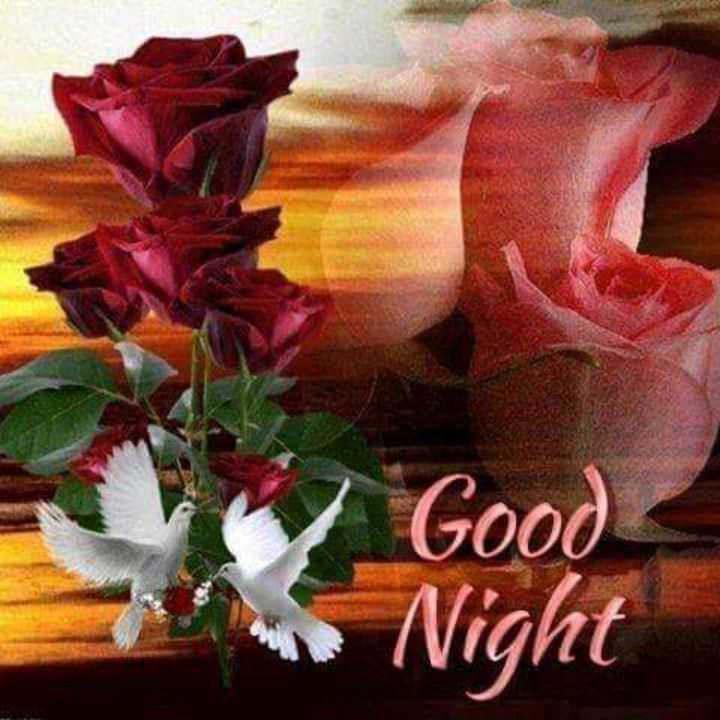 💐💐💐gm💐💐💐 - Good Night - ShareChat