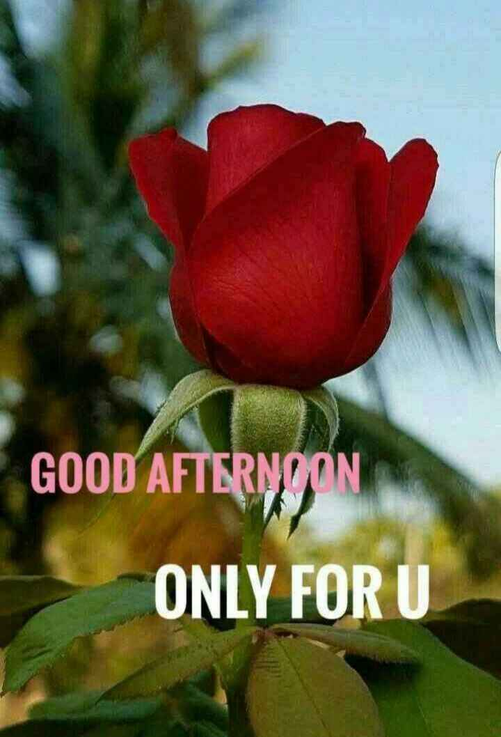 🌹good afternoon🌹 - GOOD AFTERNOON ONLY FOR U - ShareChat