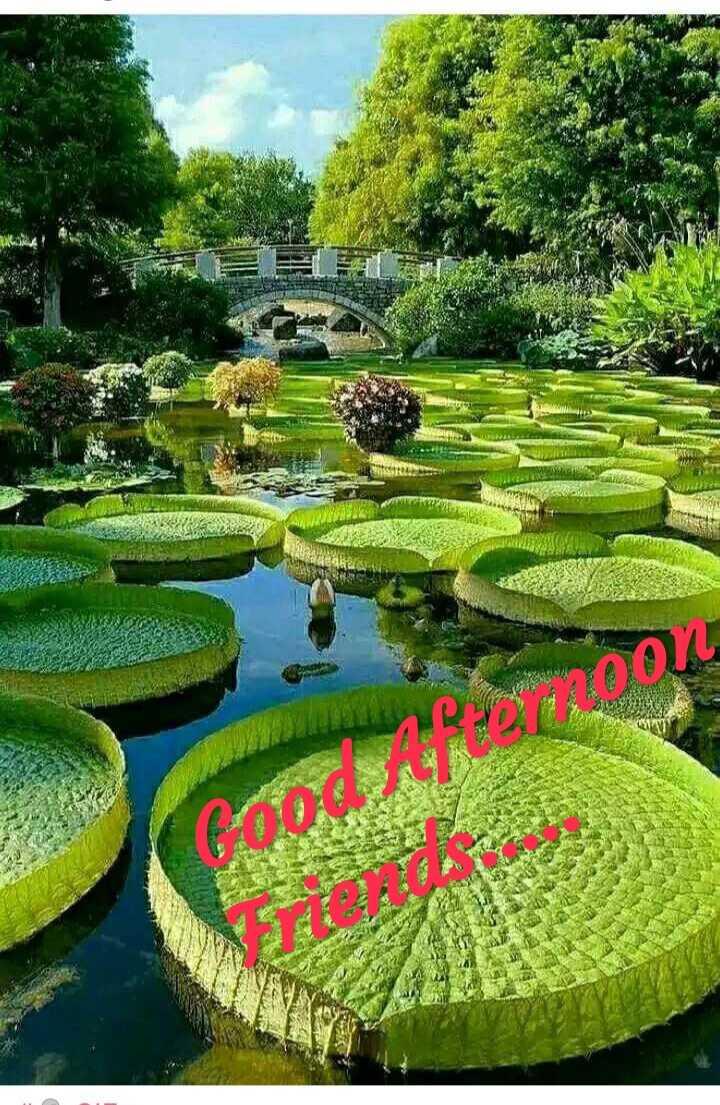 good afternoone - Солоон - ShareChat