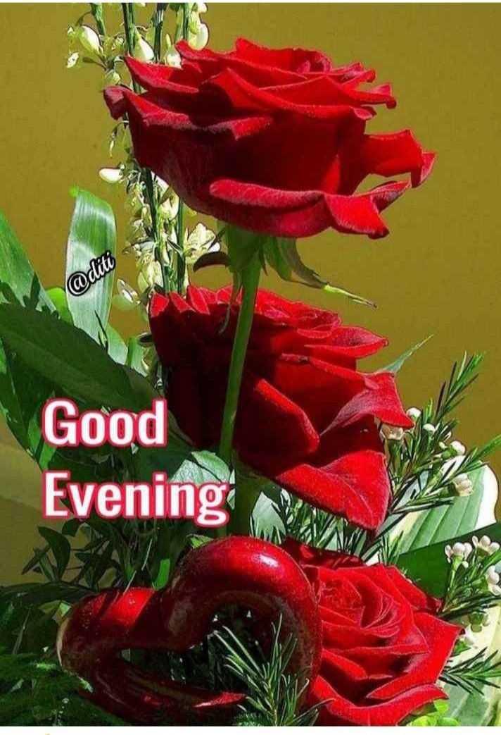 goodevening - @ diti Good Evening - ShareChat