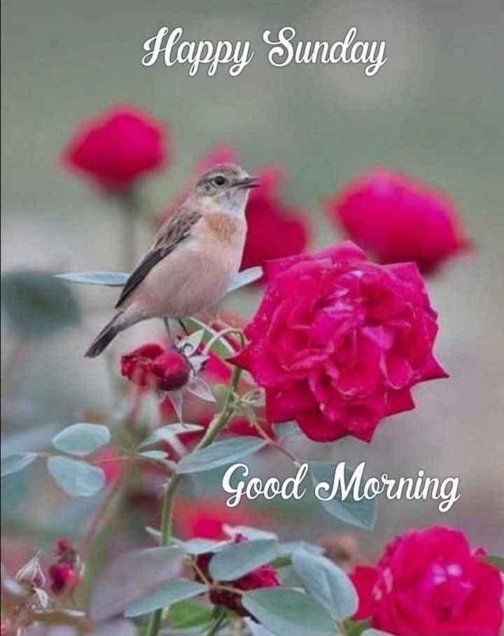 good morning (ಶುಭದಿನ) - Happy Sunday Good Morning - ShareChat