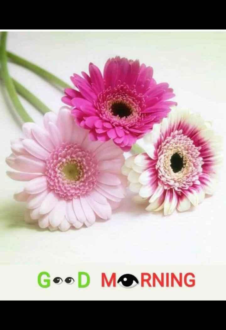 good morning 😘😘😘😘 - GooD MORNING - ShareChat