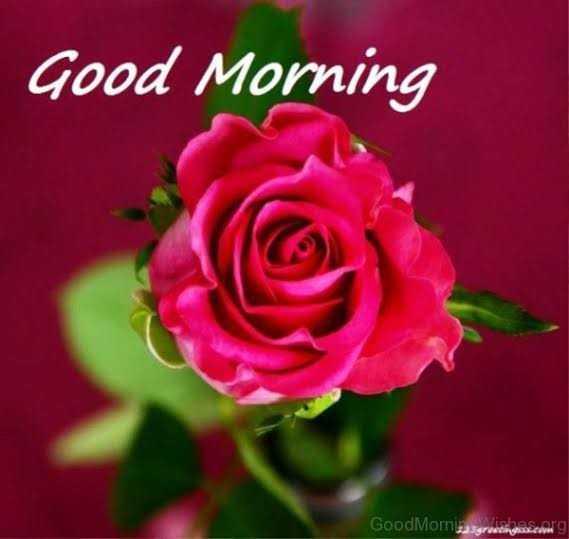 good morning ☕ - Good Morning GoodMomiasgrutines . com - ShareChat