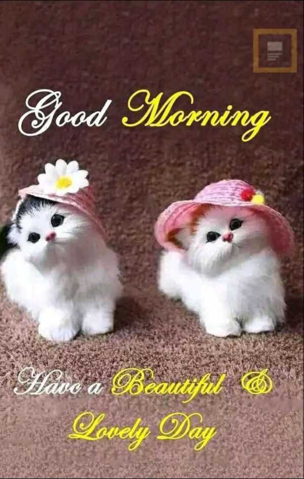 good  morning - Good Morning Have a Beautiful Lovely Day - ShareChat