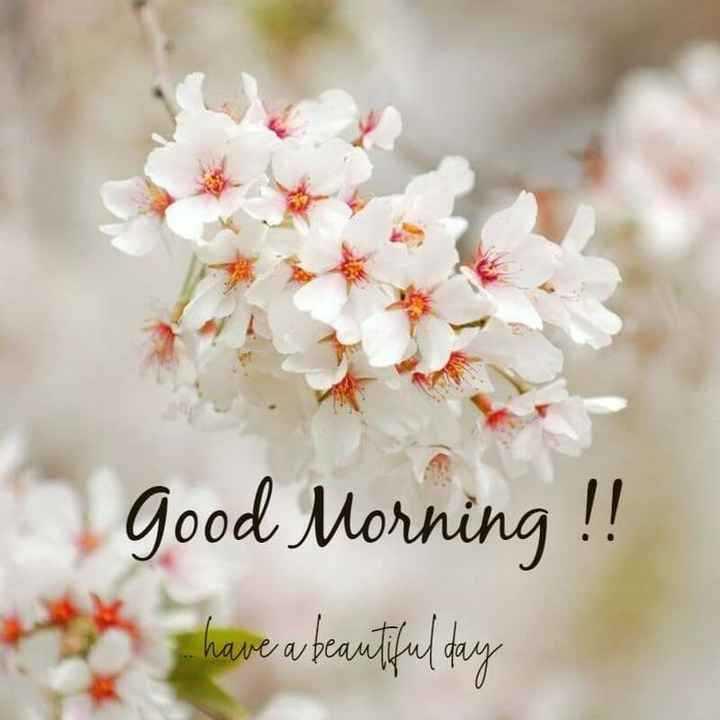 🍎good morning 🍎 - Good Morning ! ! have atrautiful day - ShareChat