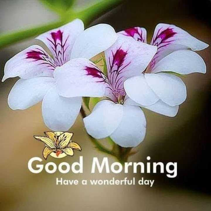 🌞good morning🌞 - Good Morning Have a wonderful day - ShareChat