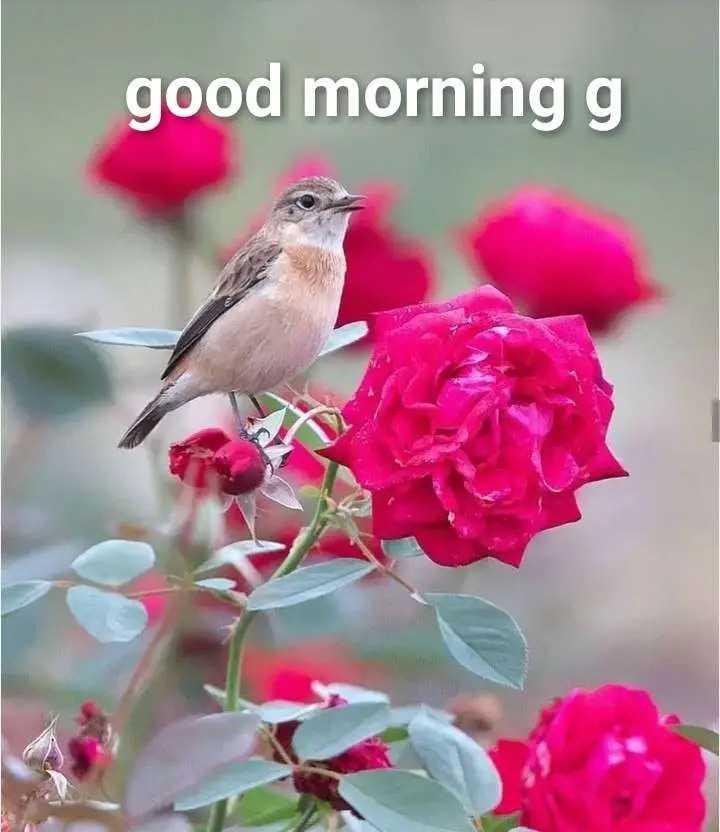 good m😊rning - good morning g - ShareChat