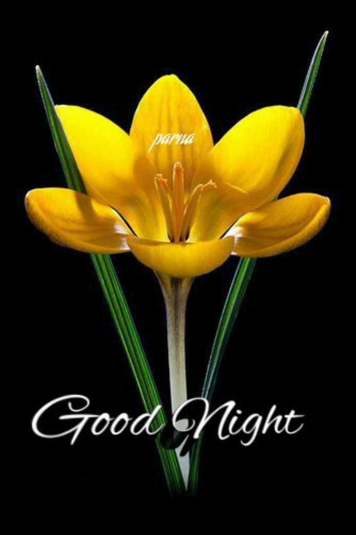 💙 good night 💙 - Good Night - ShareChat