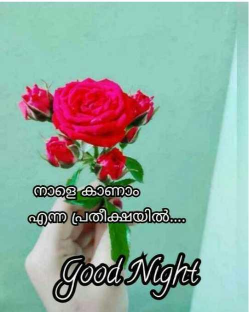 goodnight - നാളെ കാണാം എന്ന പ്രതീക്ഷയിൽ Good Night - ShareChat