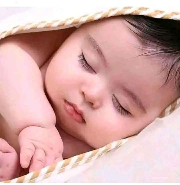 🌹🌹 good night 🌹🌹 - ShareChat
