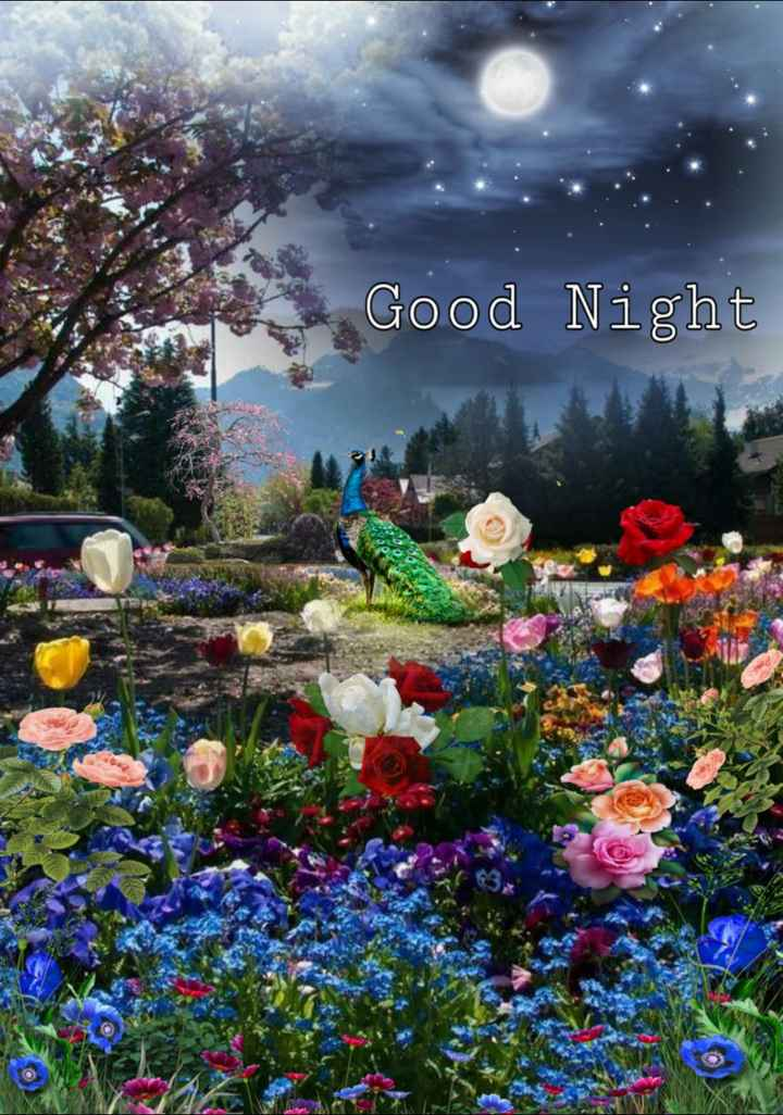 good night 🌺🌺 - Good Night - ShareChat