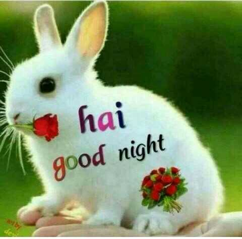 🌹🌹 good night 🌹🌹 - hai good night - ShareChat