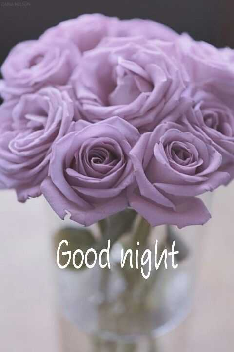 🌹🌹 good night 🌹🌹 - CARIA NELSON Good night - ShareChat
