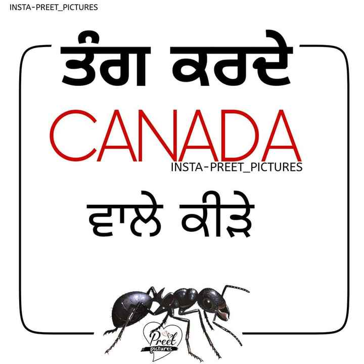 happy canada day - INSTA - PREET PICTURES ਤੰਗ ਕਰਦੇ CANADA ਵਾਲੇ ਕੀੜੇ INSTA - PREET _ PICTURES tv pictures - ShareChat