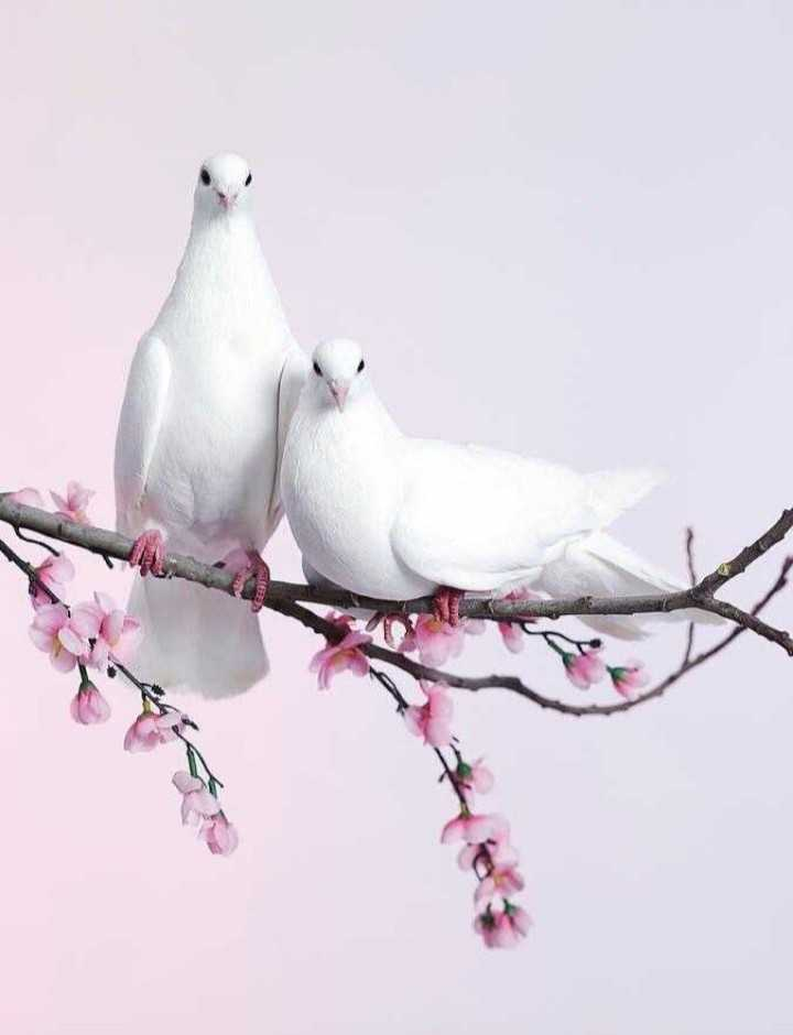 📱hd wallpaper - FEEDS - ShareChat