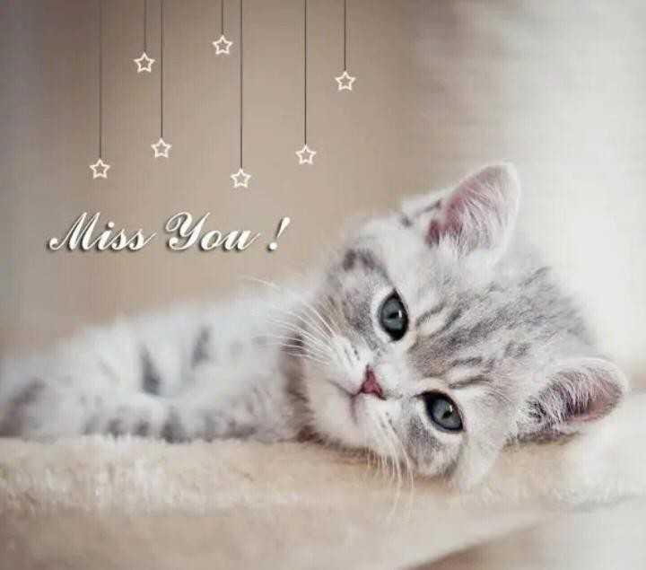 i miss u - Miss You ! - ShareChat