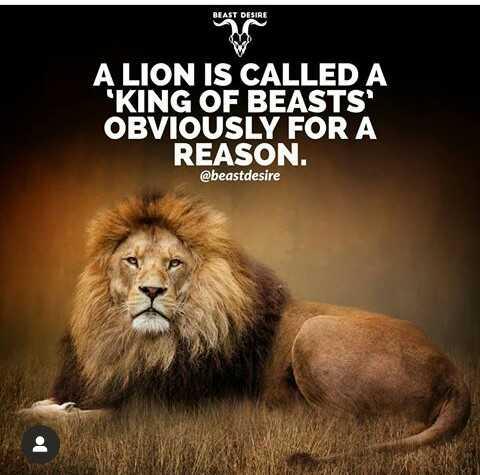 Lions शअरचट टरडग टगज Whatsapp