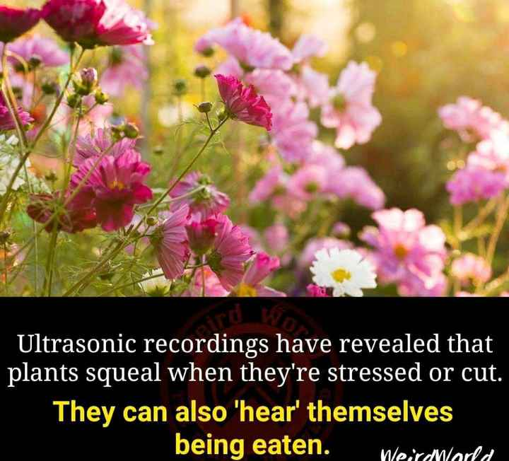 news# - Ultrasonic recordings have revealed that plants squeal when they ' re stressed or cut . They can also ' hear ' themselves being eaten . Weirdhara - ShareChat