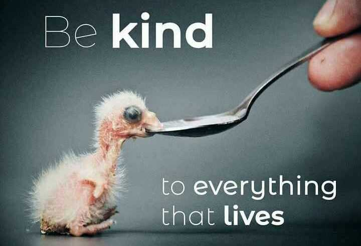 o manchi mata - Be kind to everything that lives - ShareChat