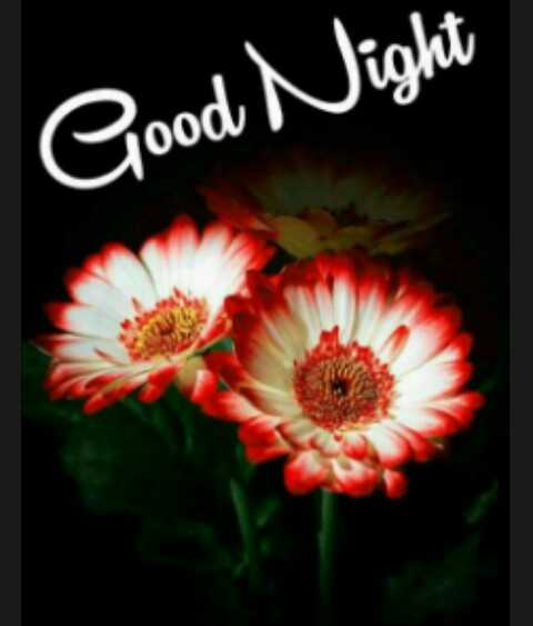 oru pavam chagathi - Good Night - ShareChat