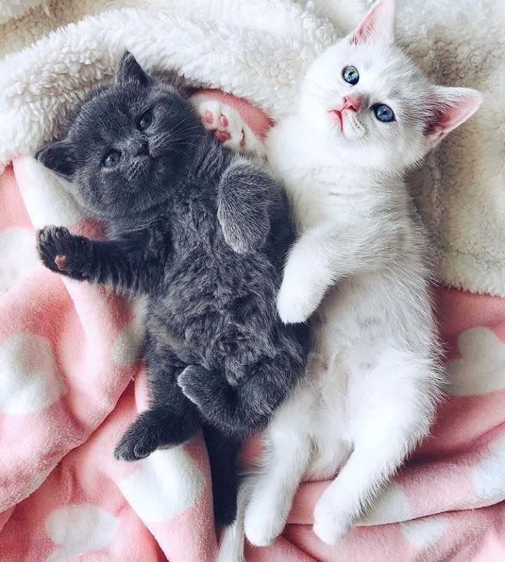 pet lovers - ShareChat