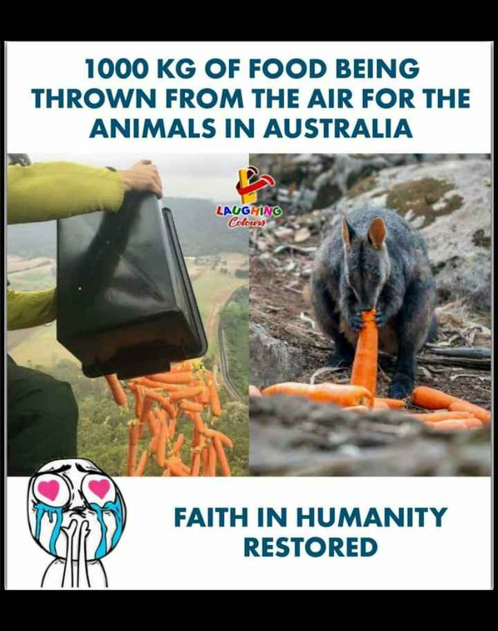 pet lovers - 1000 KG OF FOOD BEING THROWN FROM THE AIR FOR THE ANIMALS IN AUSTRALIA LAUGHING Colours FAITH IN HUMANITY RESTORED - ShareChat