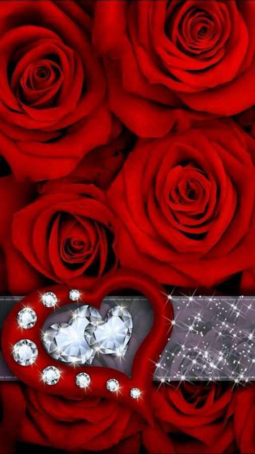 🌹 rose 🌹 - ShareChat