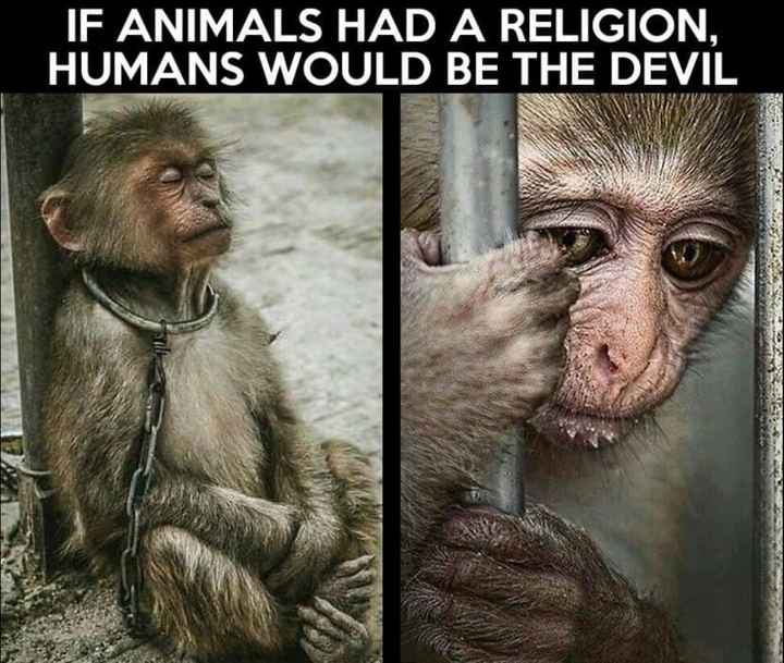 #sad truth - IF ANIMALS HAD A RELIGION . HUMANS WOULD BE THE DEVIL - ShareChat