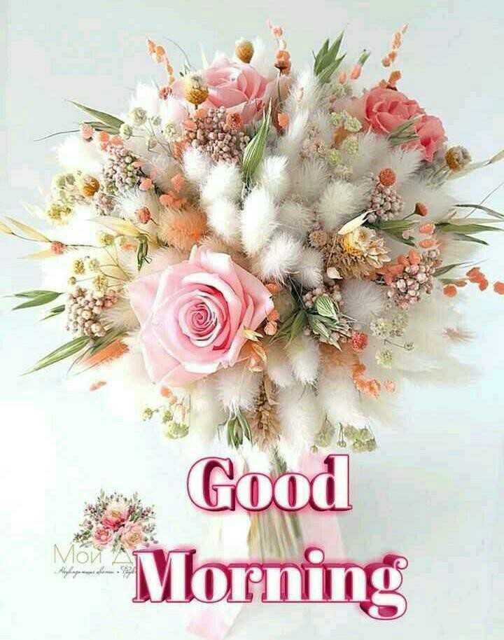 🥏skydayvideo - Good VIO Morning - ShareChat