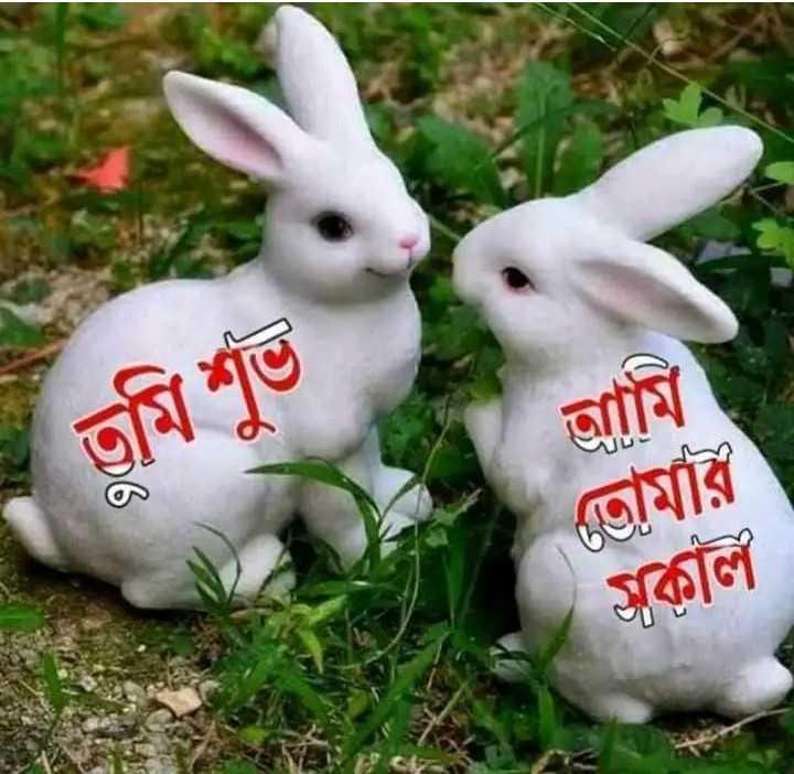 subha sokal - তুমি শুভ আমি তােমার অকাল - ShareChat