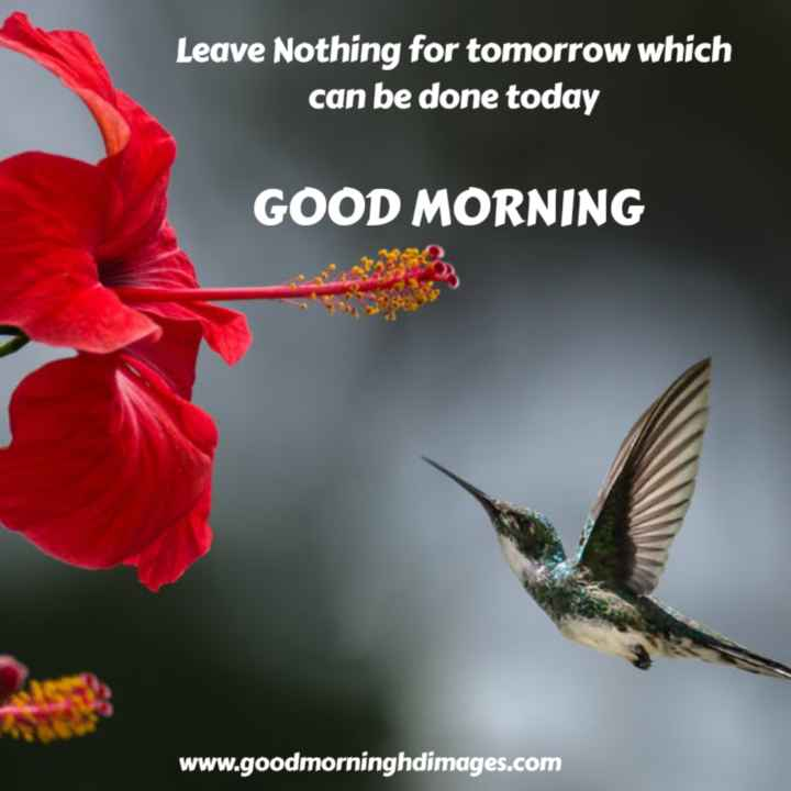 subhodayam - Leave Nothing for tomorrow which can be done today GOOD MORNING www . goodmorninghdimages . com - ShareChat