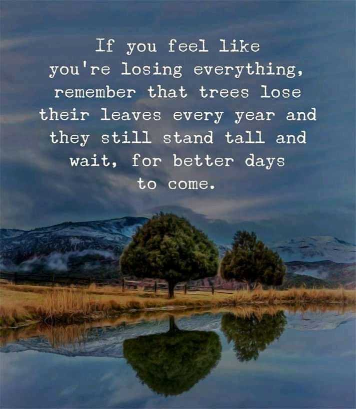 zindgi - If you feel like you ' re losing everything , remember that trees lose their leaves every year and they still stand tall and wait , for better days to come . - ShareChat